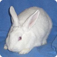Adopt A Pet :: Brenna - Woburn, MA