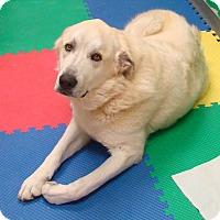 Adopt A Pet :: Marshall - Pacific, MO