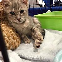 Adopt A Pet :: Spindell - Toms River, NJ
