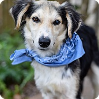 Adopt A Pet :: Finn - Baton Rouge, LA