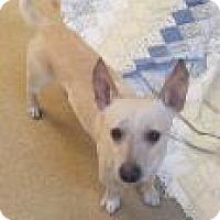 Adopt A Pet :: s/c Boo - Miami, FL