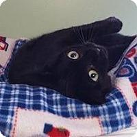 Adopt A Pet :: Possum - Springfield, VT