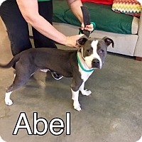 Adopt A Pet :: Abel-URGENT - Seabrook, NH