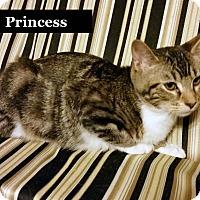 Adopt A Pet :: Princess - Bentonville, AR