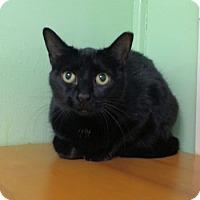 Adopt A Pet :: Mignon - Lunenburg, MA