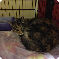 Adopt A Pet :: MIRANDA - Fall River, MA