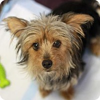 Adopt A Pet :: HANNA - Kyle, TX