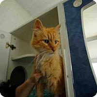 Adopt A Pet :: *BLAZE - Long Beach, CA