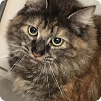 Adopt A Pet :: Rubye - Buhl, ID