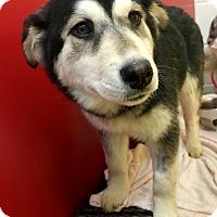 Adopt A Pet :: Lada - Las Vegas, NV