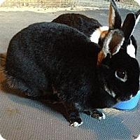 Adopt A Pet :: Cookie and Bella - Conshohocken, PA