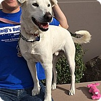 Adopt A Pet :: White Boy - Phoenix, AZ