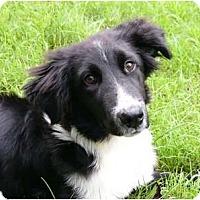 Adopt A Pet :: Misty - Mocksville, NC