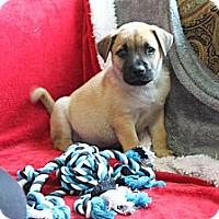 Adopt A Pet :: ADONIS - Loxahatchee, FL