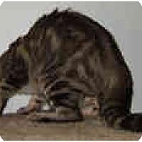 Adopt A Pet :: Madelina - Dallas, TX