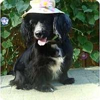 Adopt A Pet :: Tater - Sugarland, TX