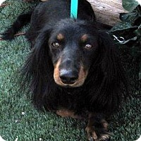 Adopt A Pet :: Lewie - Chandler, AZ