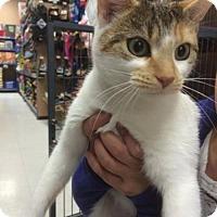 Adopt A Pet :: Grace - Hamilton, ON