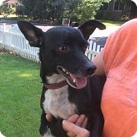 Adopt A Pet :: Marley - 13 lbs - Warwick, NY