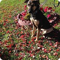 Adopt A Pet :: Aero - ONeill, NE