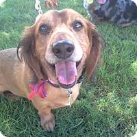 Adopt A Pet :: Elom - Scottsdale, AZ