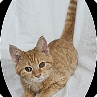 Adopt A Pet :: Rey - Mt. Prospect, IL