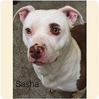 Adopt A Pet :: Sasha - Butler, KY