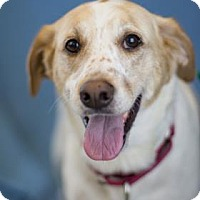 Adopt A Pet :: Piper - Bradenton, FL