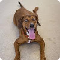 Adopt A Pet :: Justice - Bradenton, FL