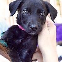Adopt A Pet :: Rosie - Huntsville, AL
