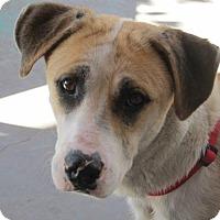 Adopt A Pet :: Momma - El Paso, TX