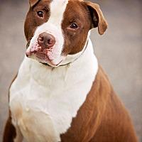 Adopt A Pet :: Tyson - Cincinnati, OH