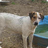 Adopt A Pet :: Jelly - Albany, NY