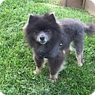 Adopt A Pet :: Hyundai
