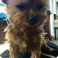 Adopt A Pet :: Elf - San Diego, CA