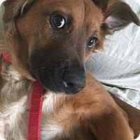 Adopt A Pet :: DAPHNE - Toronto, ON