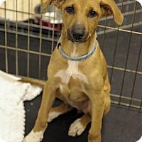 Adopt A Pet :: Emma - Jupiter, FL