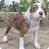 Adopt A Pet :: Natlynne - West Chicago, IL