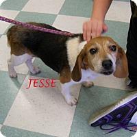Adopt A Pet :: JESSE - Ventnor City, NJ