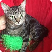 Adopt A Pet :: GABBY - Corona, CA