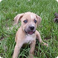 Adopt A Pet :: Eli - Weeki Wachee, FL