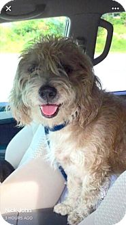 Terrier (Unknown Type, Medium)/Spaniel (Unknown Type) Mix Dog for adoption in Alpharetta, Georgia - Mohan