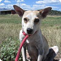 Adopt A Pet :: Candy - Ridgway, CO