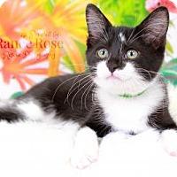 Adopt A Pet :: Alfalfa - Sterling Heights, MI