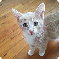 Adopt A Pet :: Lillian (COURTESY POST) - Baltimore, MD