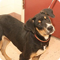 Adopt A Pet :: RADAR - McDonough, GA