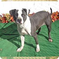 Adopt A Pet :: BREEZY - Marietta, GA
