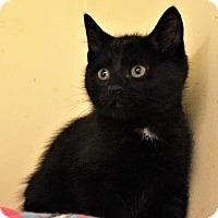 Adopt A Pet :: Cappi - West Des Moines, IA