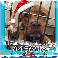Adopt A Pet :: Cain (URGENT!) Moreno Valley - San Bernardino, CA