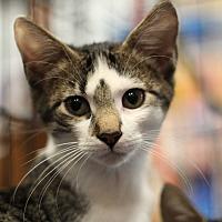 Adopt A Pet :: Blitz - Marietta, GA